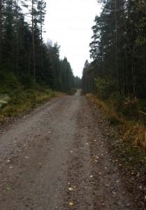 Kuva 3 - Loppupuolisko kulkee metsäautoteitä pitkin. Tämänkin osuuden pääsee kulkemaan kätevästi fillarilla.