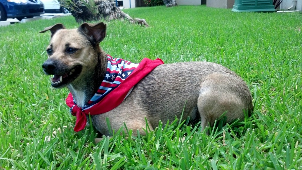 Kuva 1 - Saturday -elokuvan tähti on Kato niminen koira