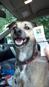 Kuva 3 - Kato-koira on aina HurricaneJuanin kanssa mukana kätköreissuilla.